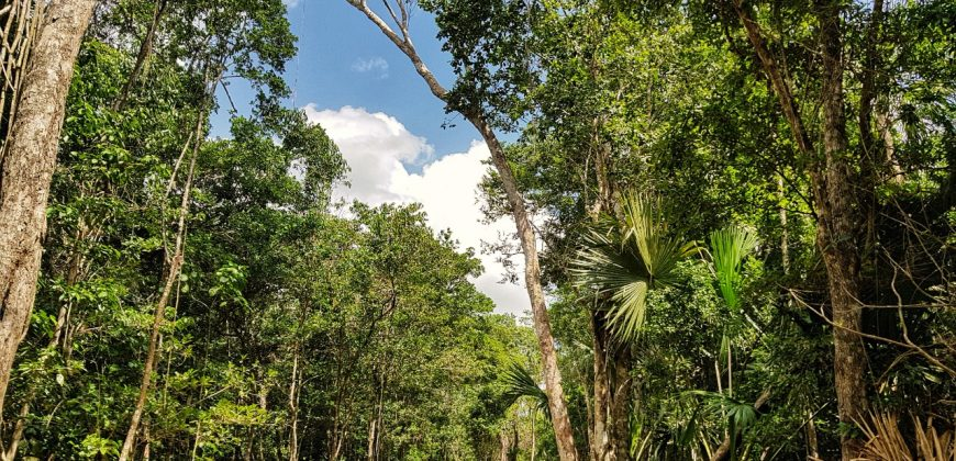 Lotes Ecológicos en la Selva Maya